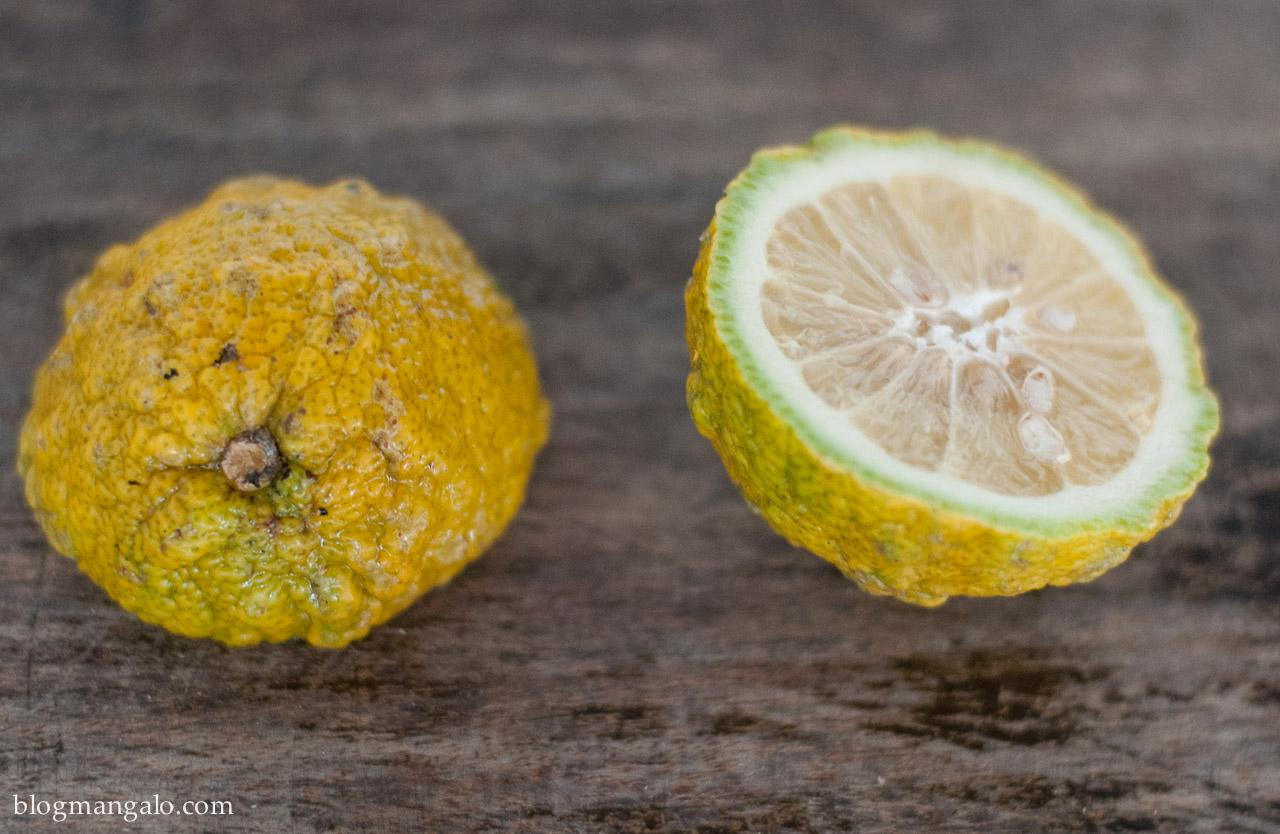 limão-boi da bahia
