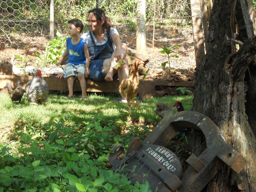 quintal com galinhas